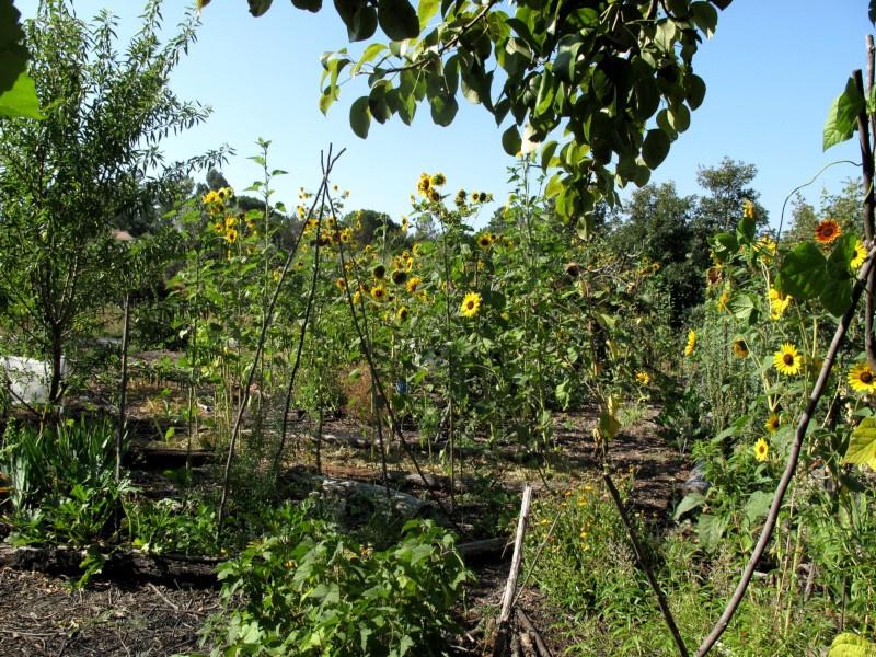 Food Forest Garden