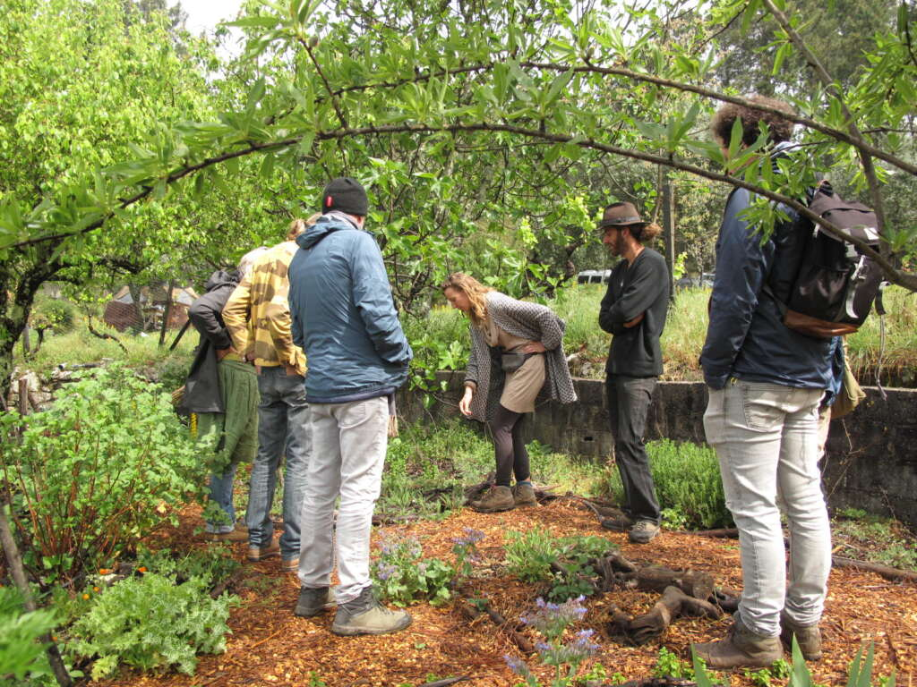 permaculture intro course